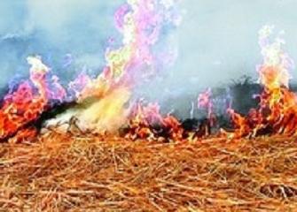 سوزاندن بقایای گیاهی اراضی زراعی ممنوع شد